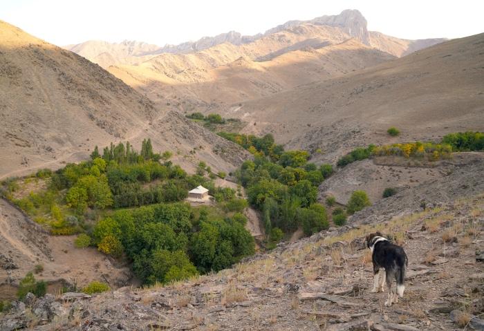Kleiner Wald mit einem Haus in den Hügeln von Usbekistan